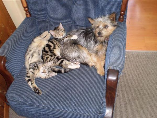 laddie and kittens s
